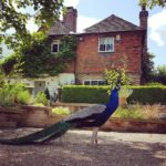retreat farmhouse east sussex